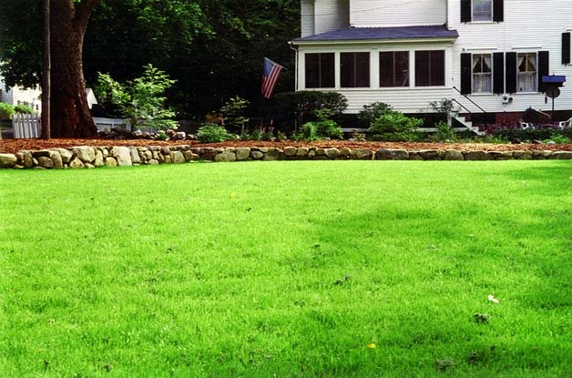 Let New Yard Landscaping transform your lawn